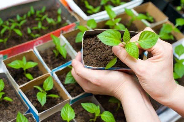 dyrke grønnsaker