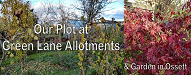 Our Plot at Garden Lane Allotments