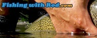 Top 20 Fishing Blogs | Fishing with Rod